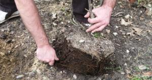 kyle planting.mar (3)