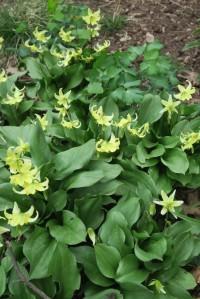 mystery plant a. mar30.161