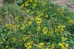 mystery plant mar301.61
