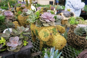 river valley lawn and garden show (28)