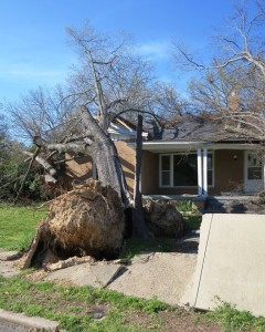 tree fallen over (1)