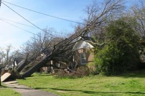 tree fallen over (2)