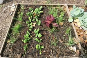 veg garden mar (2)