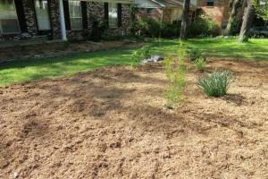 kyles yard mulched (3)