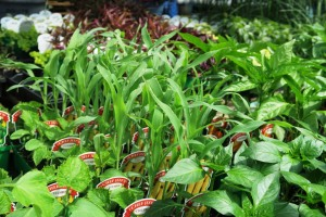 plant choices apr.163
