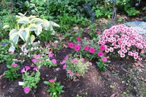 callibrachoa and petunias.ma14 (1)
