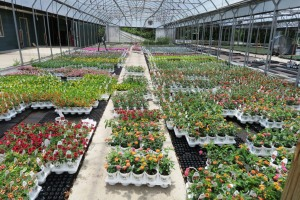 culbertson greenhouses may16 (6)