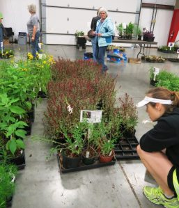 faulkner county plant sale.may1611