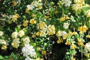 gardenia may28 (2)