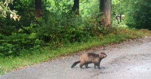groundhog may (1)
