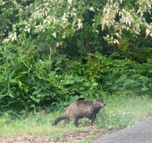 groundhog may (3)