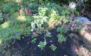 my garden may1.161