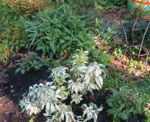 my garden may1.162