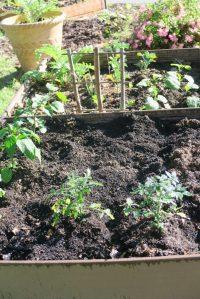 my garden may1.166