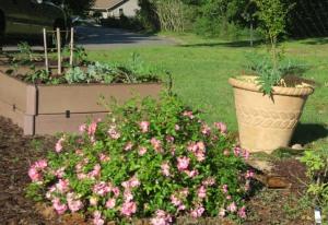 my garden may1.167