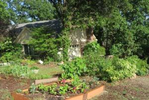 my garden may1.168