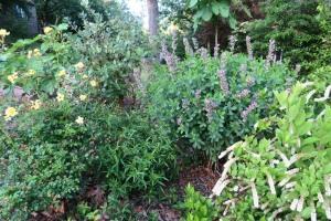 perennials my garden may16