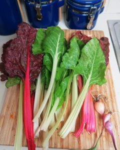 swiss chard.may1 (1)