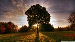 tree-shade_00440193