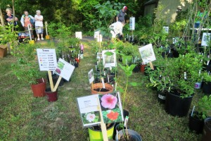 van buren county mg plant sale 16 (20)
