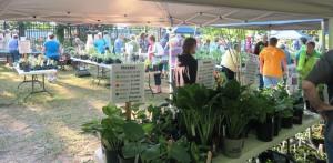 van buren county mg plant sale 16 (29)