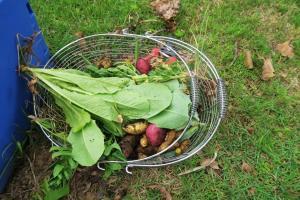 vegharvest may16