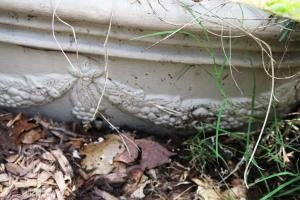 drainage problem.jun161