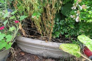 drainage problem.jun162