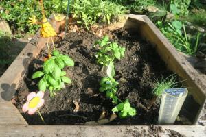herbs renovated.jun16