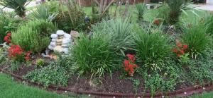 kalanchoe in garden (1)