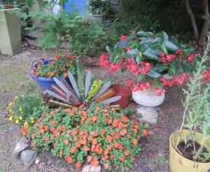 my garden.jun163
