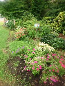 my garden jun26.16