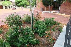 ualr planting (4)