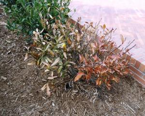 ualr planting (9)
