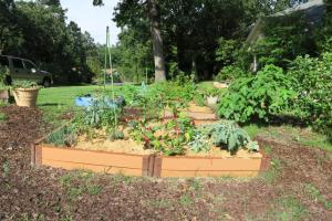 veg gardens mulched (1)