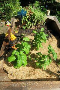veg gardens mulched (2)