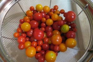 cherry tomatoes.july15.16