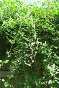 fleece vine july161