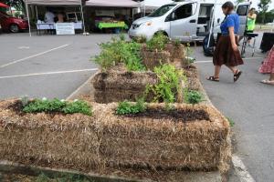 hay bale gardens. july161