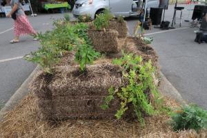 hay bale gardens. july162