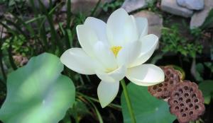 lotus.july17 (3)