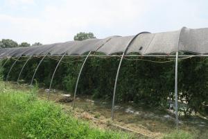 north pulaski farm (1)