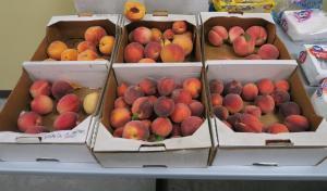 peaches clarksville nacaa (25)