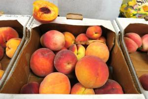 peaches clarksville nacaa (26)
