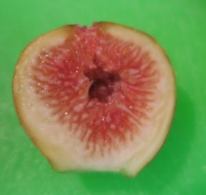 figs aug14 (5)