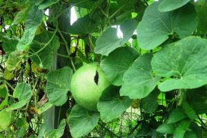 gourds learning fields aug (3)