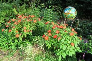 impatiens and annuals aug23 (3)