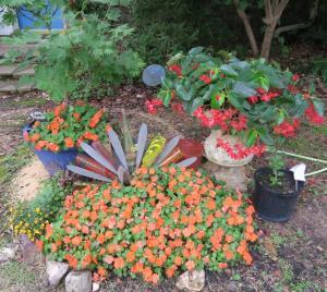my garden july4.16
