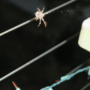 spiders aug.3 (1)