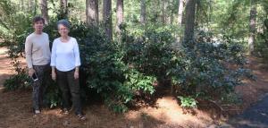 camellia-sinensis-el-dorado-16-4